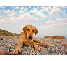 Playful Dog On The Beach Photographic Print