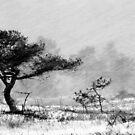 30.11.2012: Pine Tree and Blizzard II by Petri Volanen