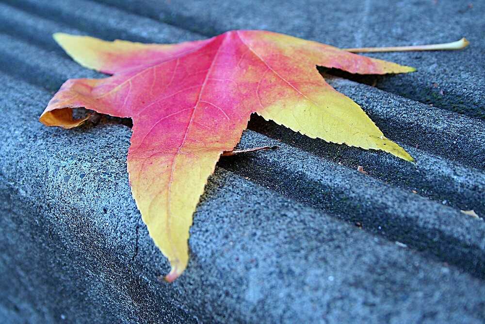 Lonely Lone Leaf by Randy Richards