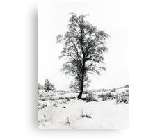 Tree in the snow Canvas Print
