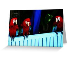 talking birds  Greeting Card