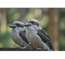 Kookaburras Keeping Company by Lorraine McCarthy Photographic Print
