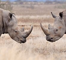 Rhinoceros by jeff97