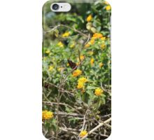 Butterflies in paradise iPhone Case/Skin