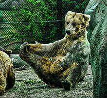 A Big Grizzly Stretch & Scratch  by Culrick99