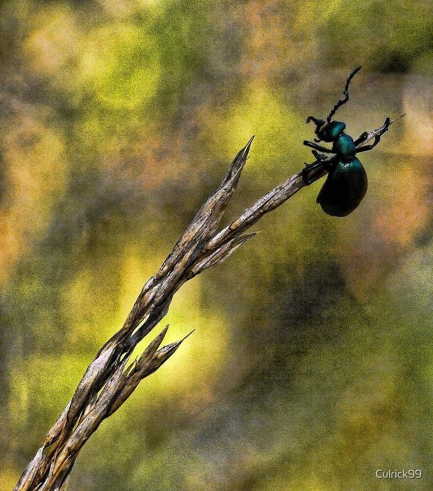 Hang On! by Culrick99