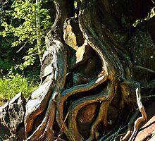Tree Tangle Art I by Culrick99