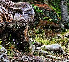 Tree Tangle Art II by Culrick99