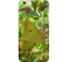 Yellow Sulphur Butterfly Pair iPhone Case/Skin