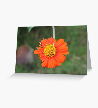 Philippines flower Greeting Card