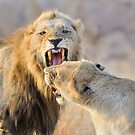 Lions by jeff97