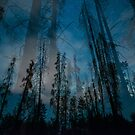 Forest Glow (Blue) by Armando Martinez
