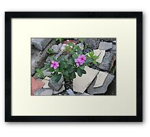Philippine flowers Framed Print