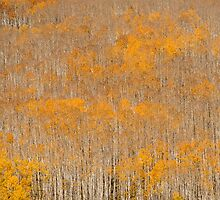 Aspen Brushes by Armando Martinez
