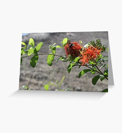 Philippines flowers Greeting Card
