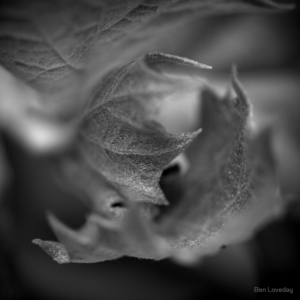 All Nature is Too Little by Ben Loveday