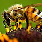 The Bee All  by Graeme Nix