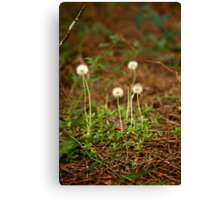 A small world.  Canvas Print