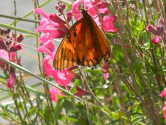 Butterfly Wears Polka Dots by Navigator
