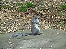 Do It Gangnam Style - Gray Squirrel goes Korean by MotherNature