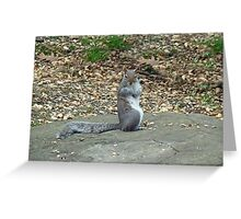 Do It Gangnam Style - Gray Squirrel goes Korean Greeting Card