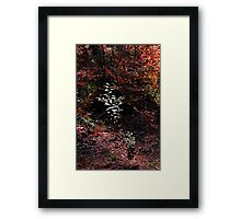 Autumn in the Pines Framed Print