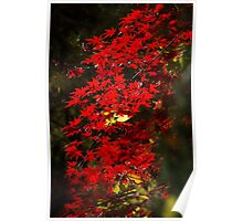 Red Maple Leafs Poster