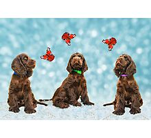 3 Puppies & The Butterflies Photographic Print