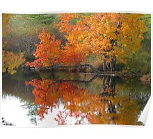 Autumn tree branch on water Poster
