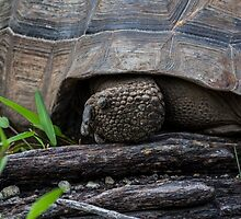 Galapagos Islands  by Withns