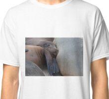 galapagos islands sea lions Classic T-Shirt
