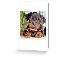 Female Rottweiler Puppy Photographic Portrait Greeting Card