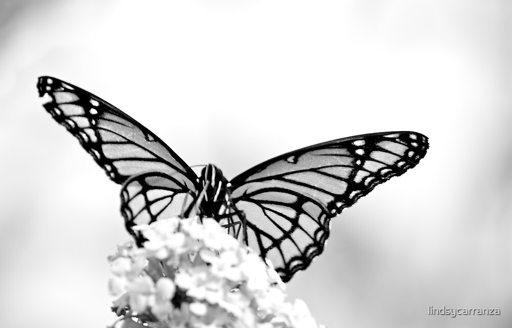 Monarch in Black and White by lindsycarranza