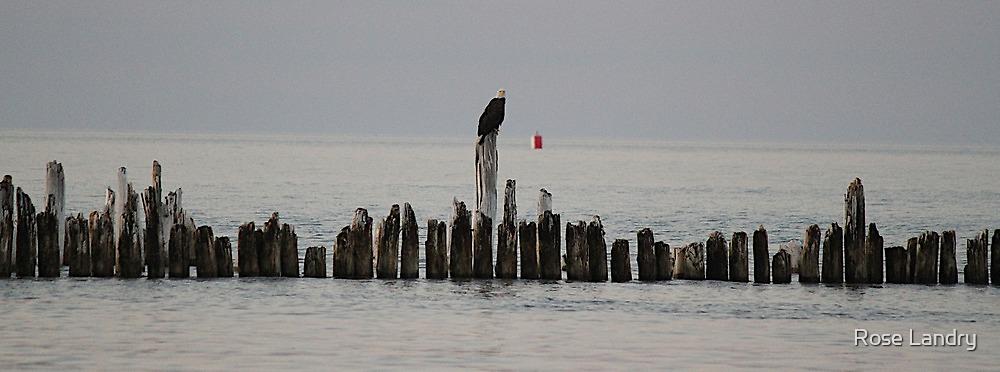Eagle at Sunset by Rose Landry