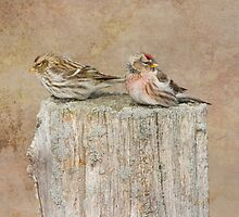 Mr and Mrs Redpoll by michelsoucy