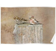 Mr and Mrs Redpoll Poster