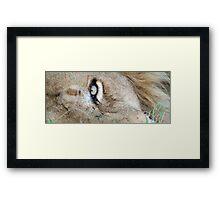 The eye of a lion Framed Print