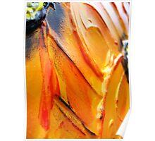 Orange Flower Petals Poster