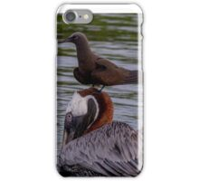 Galapagos Islands Pelican with Brown Noddy iPhone Case/Skin
