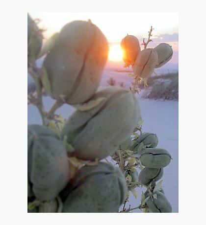 Hiding Sun Photographic Print