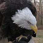 My Name is Bald Eagle by Connie Bunke