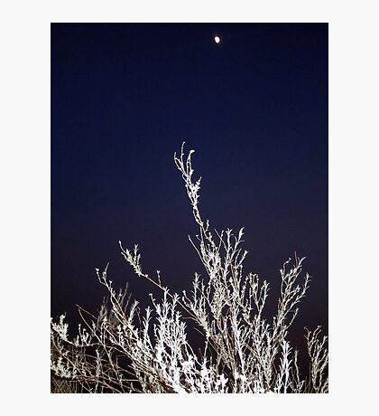 Reaching for the Moon Photographic Print
