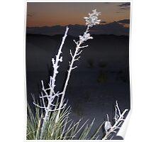 Plant Spotlight Poster