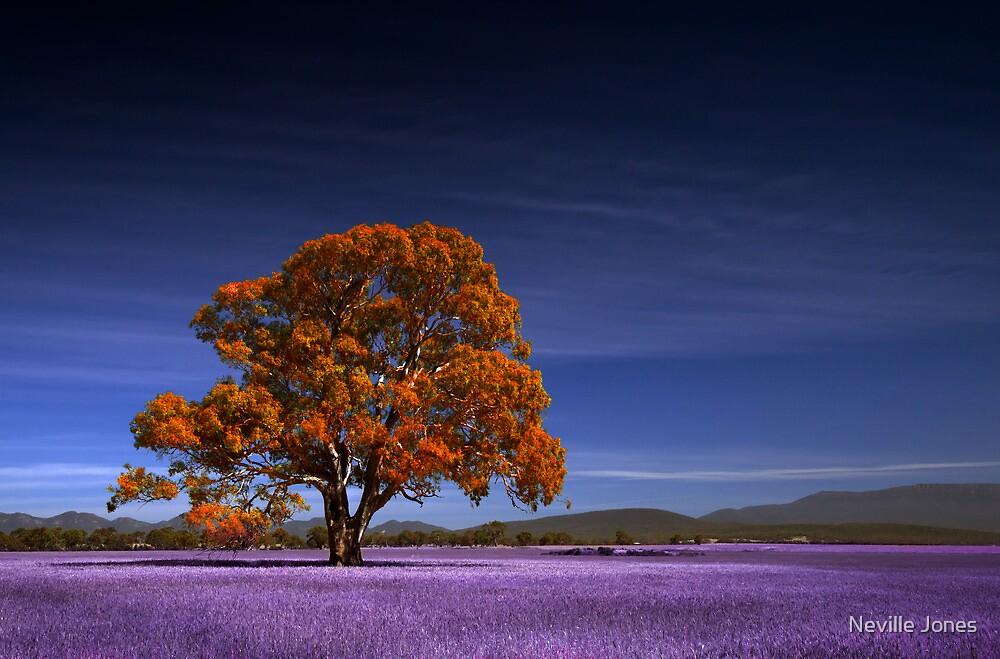 Fantasy tree by Neville Jones