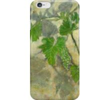 Grape vine with leaves and clusters of grapes iPhone Case/Skin