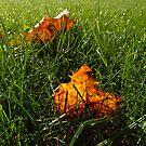 Autumn by jimmylu