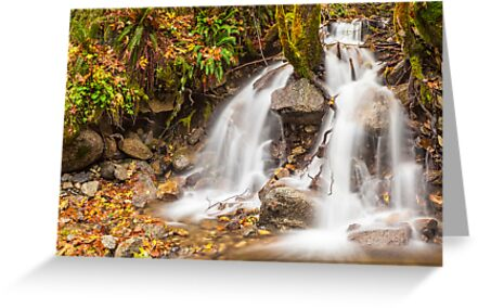 Un-named mountain stream in the Beckler River Valley by Jim Stiles