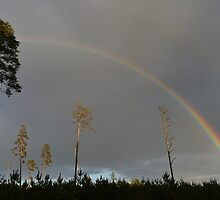 Forest Rainbow Landscape by monstamorph