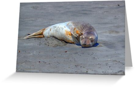 Now..where's that beach towel? by JamesA1