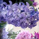 Hyacinths for Spring by Margi